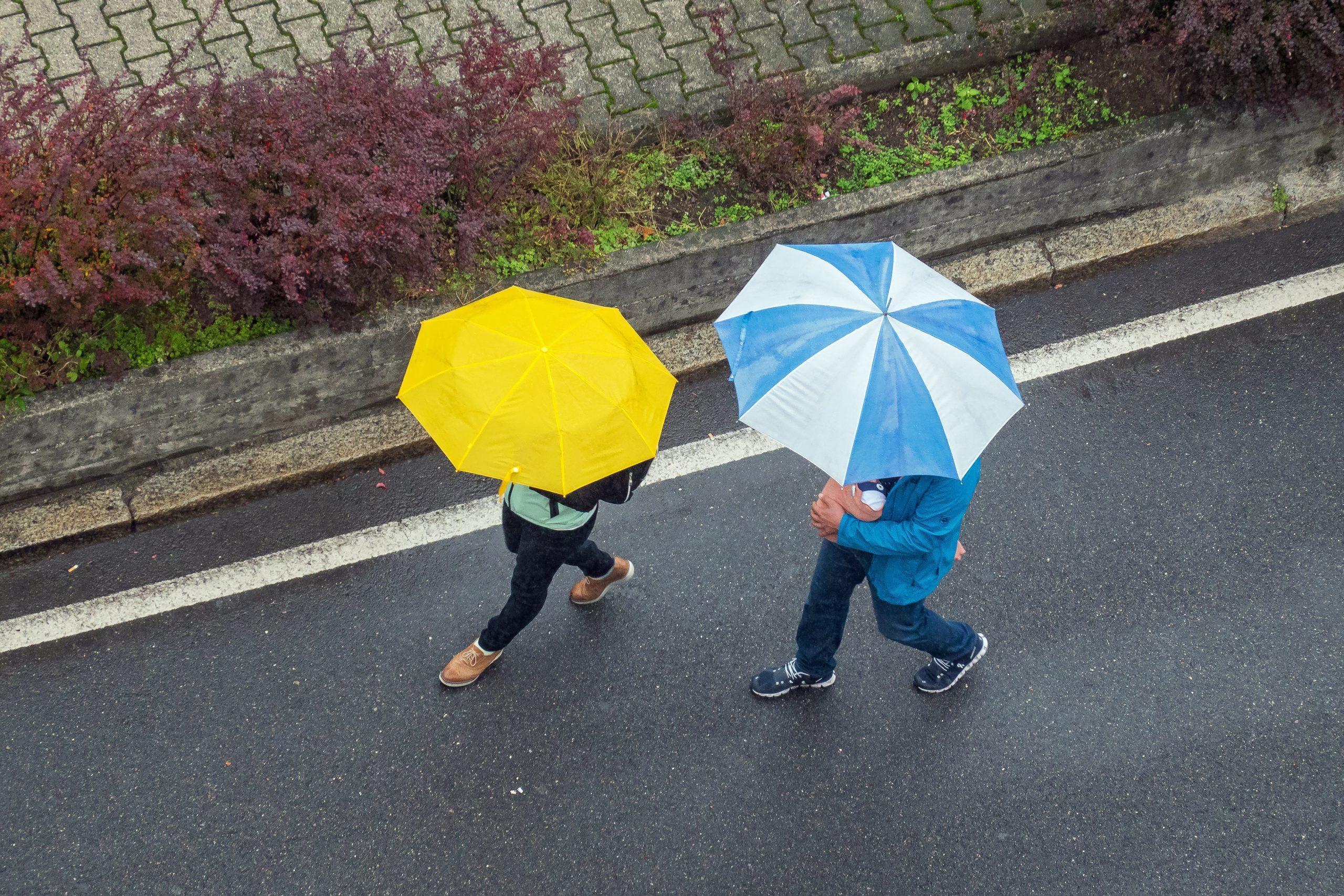 降っ 英語 が いる 雨 て